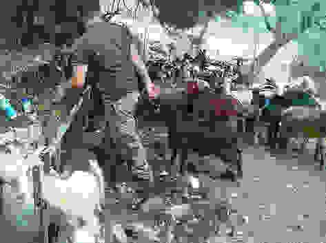 Η κουρά των αιγοπροβάτων στα Πουλάτα (video & φωτογραφίες)