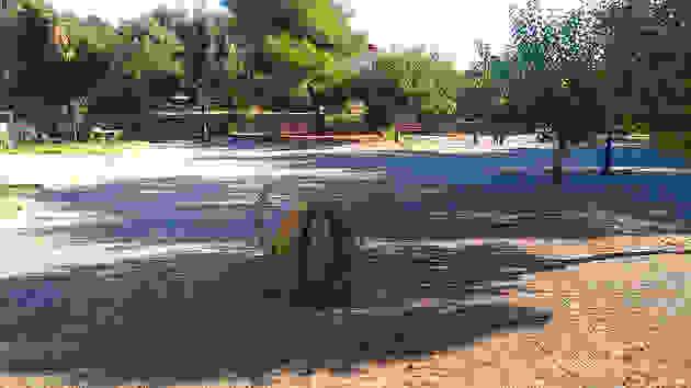 Το σκαθάρι «χτύπησε» και τους φοίνικες της πλατείας των Πουλάτων