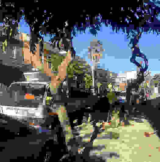 Κλάδεμα δένδρων στο Αργοστόλι