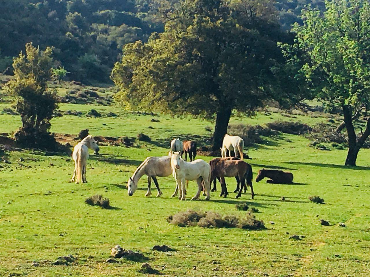 Αδιάφορος ο αντιδήμαρχος Κουρκουμέλης για τις ζημιές που προκαλούν τα άλογα του Αίνου στην πεδιάδα του Ελειού