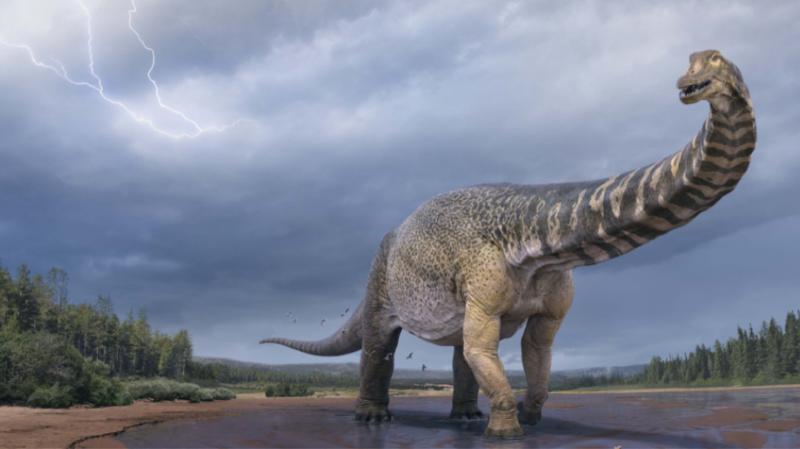 «Αυστραλοτιτάν» Ανακαλύφθηκε δεινόσαυρος που είχε μήκος όσο ένα γήπεδο μπάσκετ και ύψος δύο ορόφων